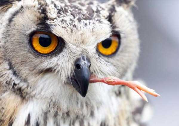 animals-eating-animals (5)