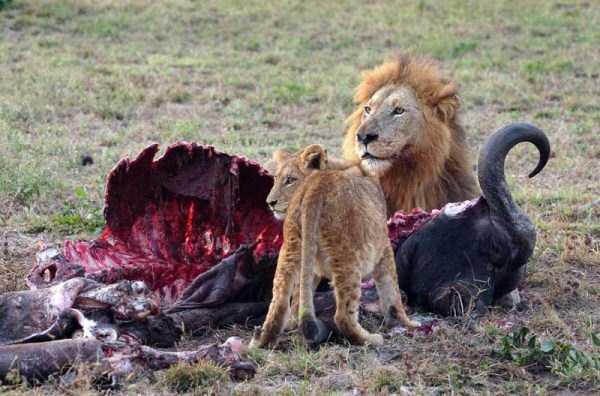 animals-eating-animals (8)