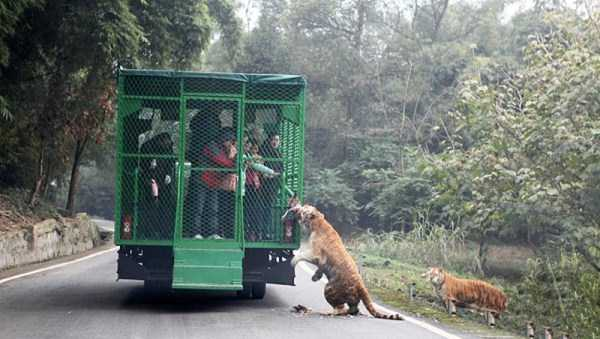 chinese-zoo-tourists-in-cages (1)