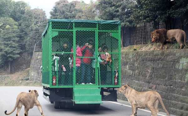 chinese-zoo-tourists-in-cages (10)