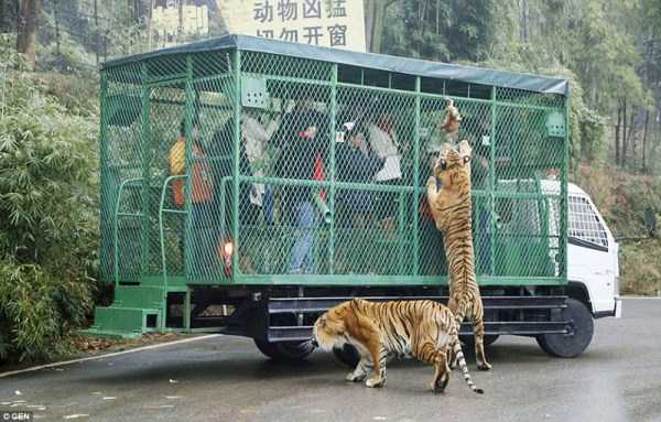 chinese-zoo-tourists-in-cages (4)
