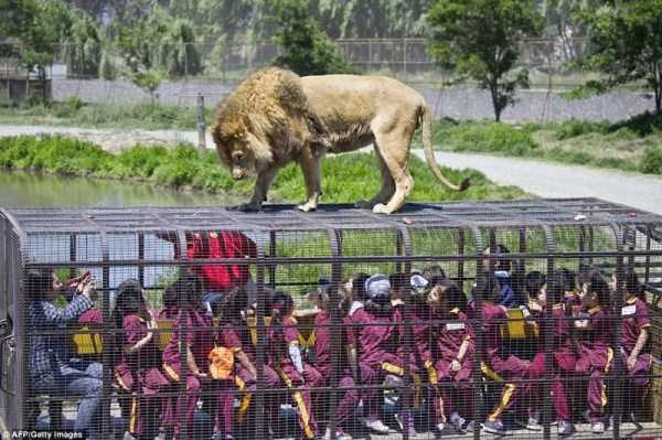 chinese-zoo-tourists-in-cages (7)