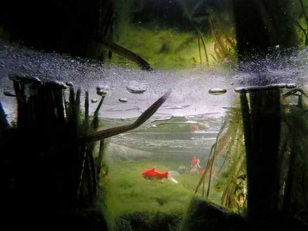 clearest-waters (10)