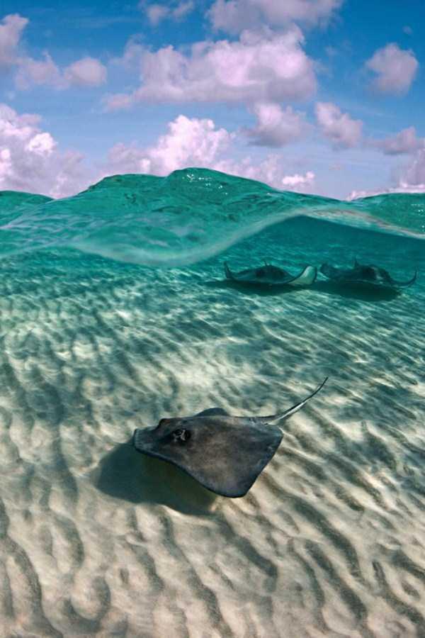 clearest-waters (34)