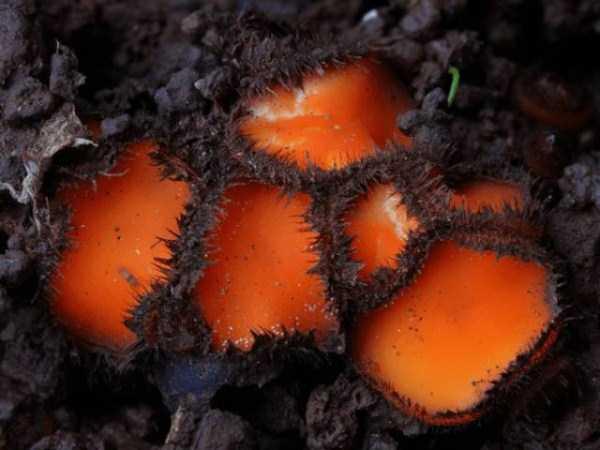 colorful-mushrooms (10)