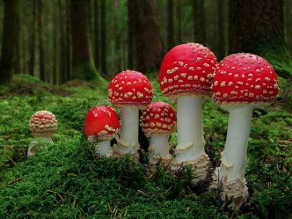 colorful-mushrooms (16)
