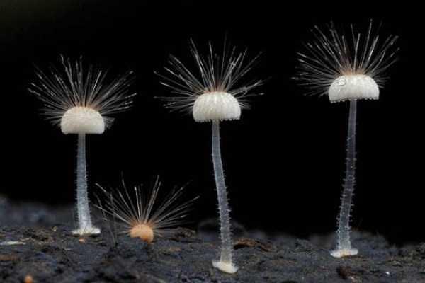 colorful-mushrooms (17)