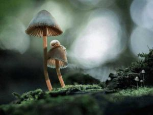 colorful-mushrooms (21)