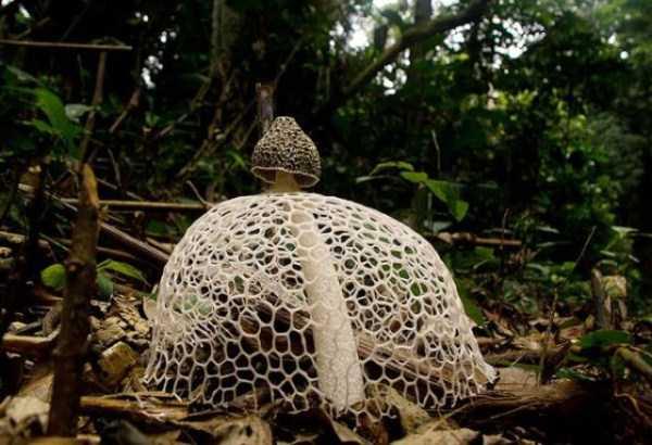 colorful-mushrooms (3)
