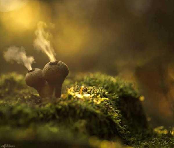 colorful-mushrooms (30)