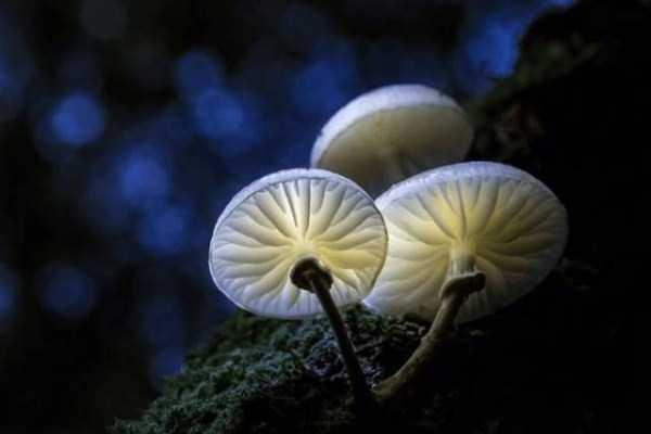 colorful-mushrooms (5)