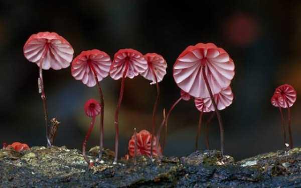 colorful-mushrooms (6)