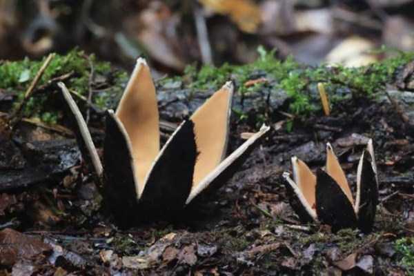 colorful-mushrooms (7)