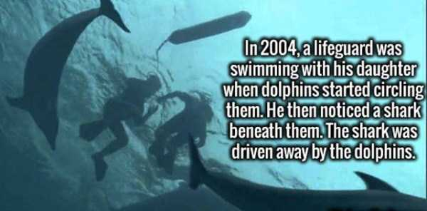 fun-random-facts (45)