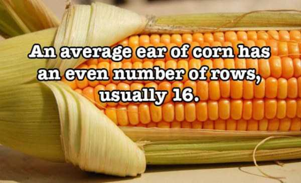surprising-food-facts (15)