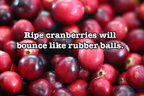 surprising-food-facts (28)