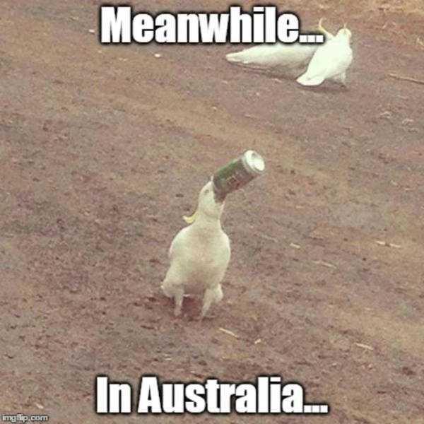 wtf-australia (34)