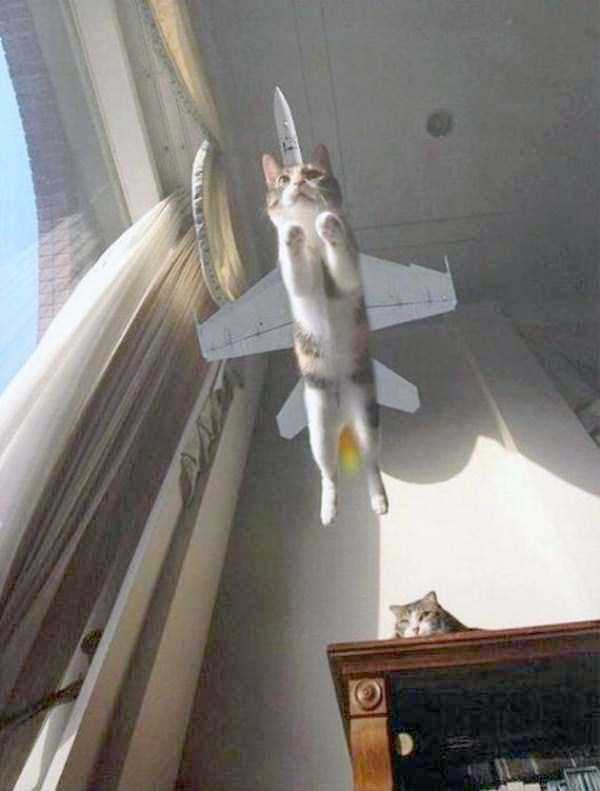 perfectly-timed-photos (16)