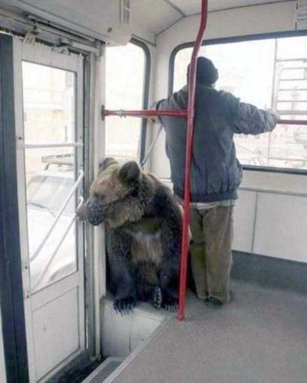 wtf-russia-pictures (5)
