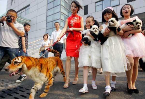 china-funny-pics (9)