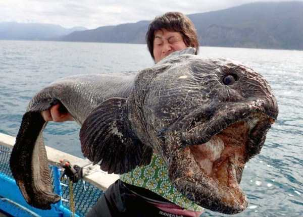 deep-waters-creatures (16)