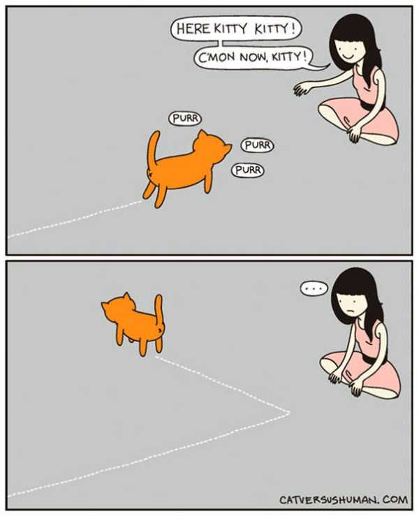 life-with-cats-funny-comics (1)