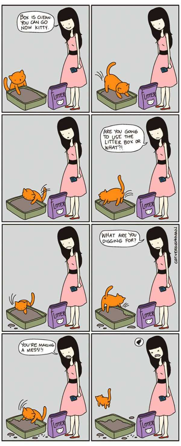life-with-cats-funny-comics (10)