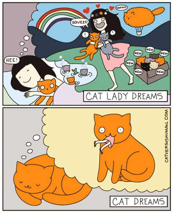 life-with-cats-funny-comics (100)