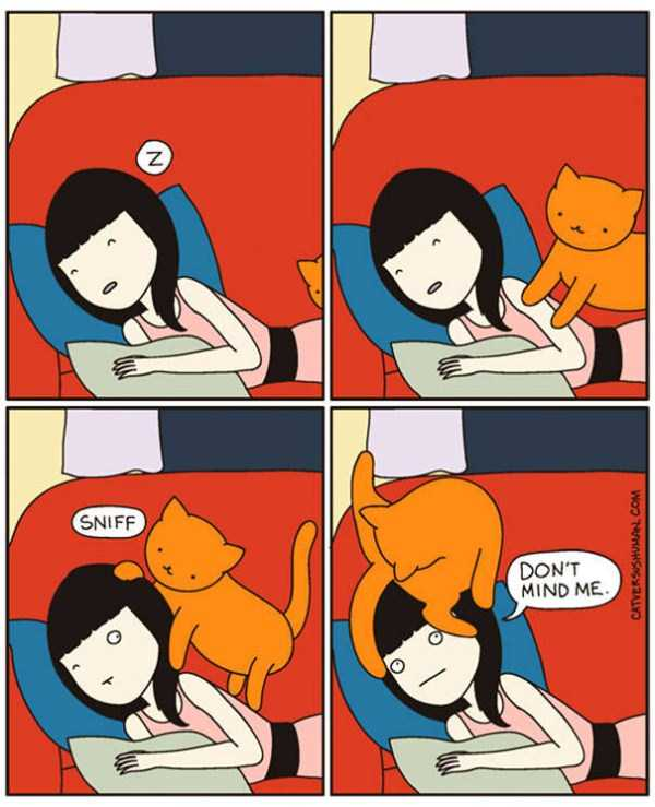 life-with-cats-funny-comics (101)
