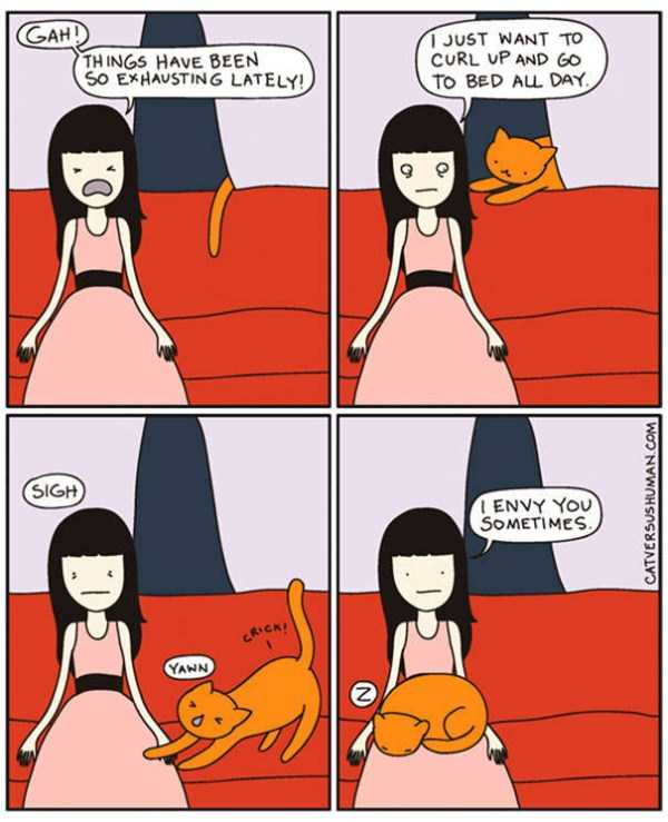life-with-cats-funny-comics (103)
