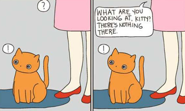 life-with-cats-funny-comics-(104)