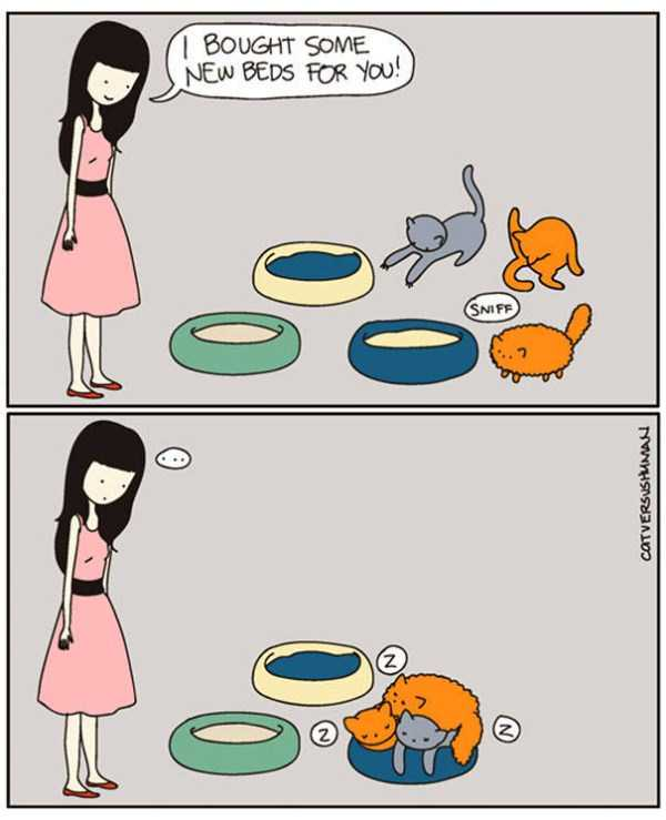 life-with-cats-funny-comics (12)