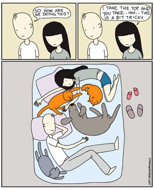 life-with-cats-funny-comics (13)