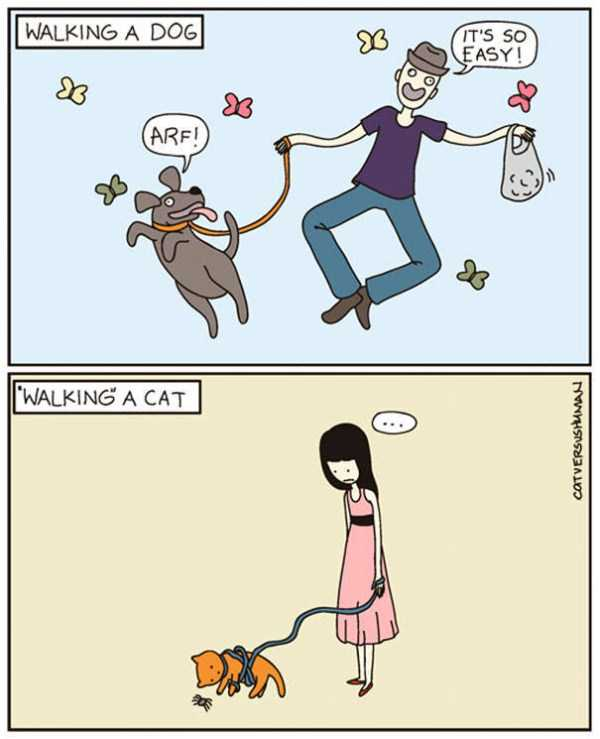 life-with-cats-funny-comics (18)
