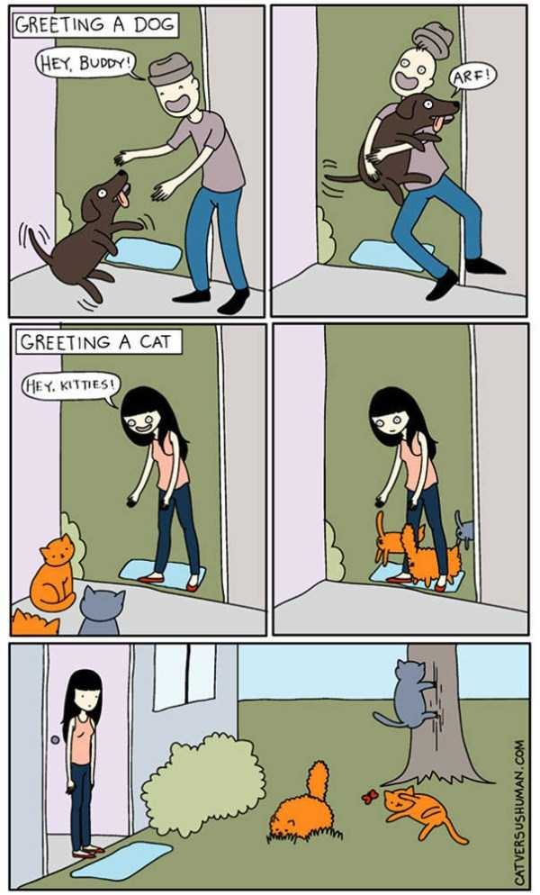 life-with-cats-funny-comics (2)