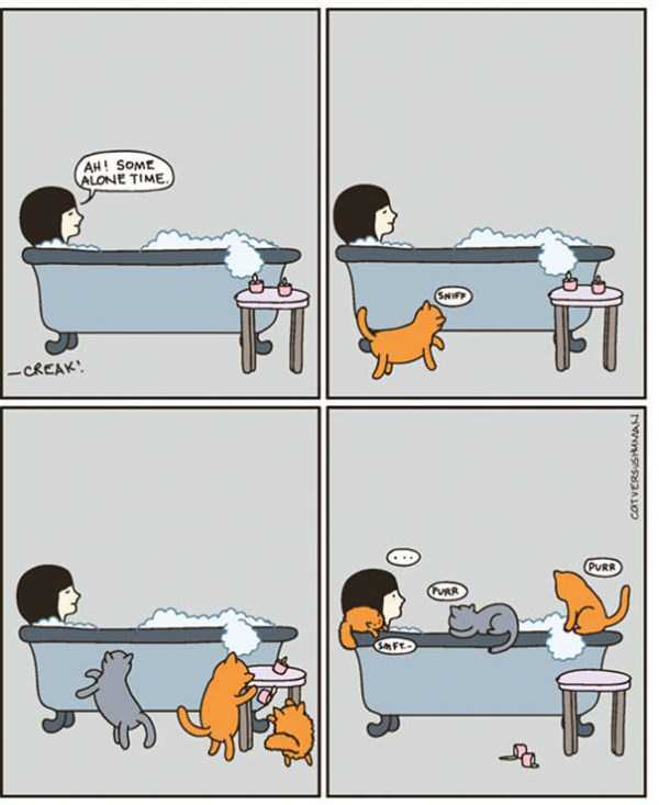 life-with-cats-funny-comics (31)