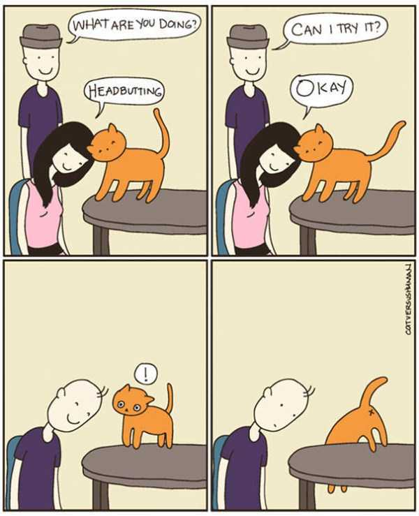 life-with-cats-funny-comics (39)