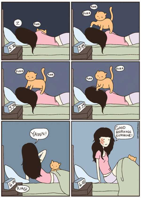 life-with-cats-funny-comics (49)