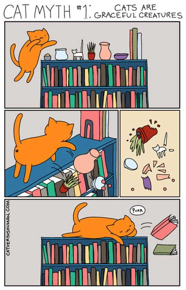 life-with-cats-funny-comics (5)
