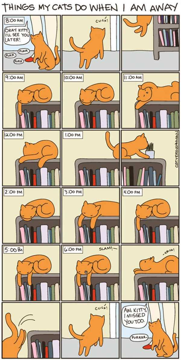life-with-cats-funny-comics (66)