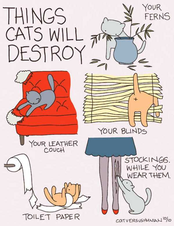 life-with-cats-funny-comics (69)