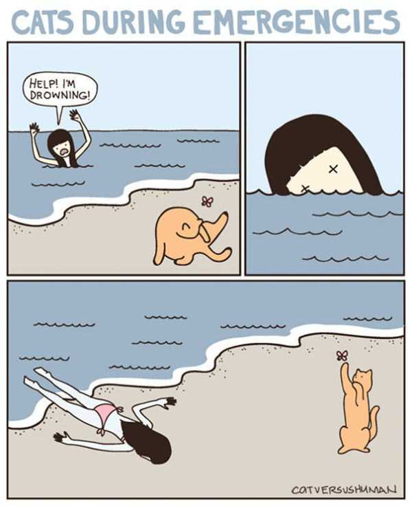life-with-cats-funny-comics (72)