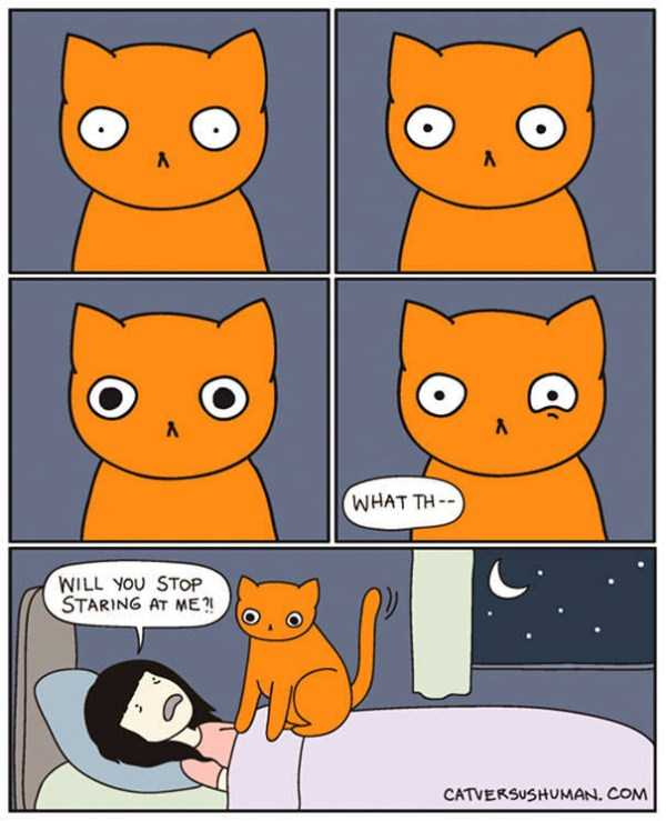 life-with-cats-funny-comics (80)