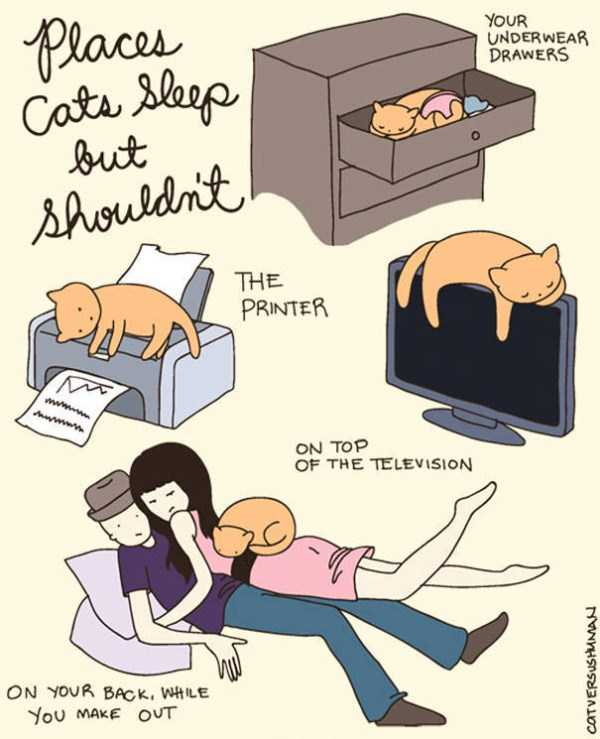 life-with-cats-funny-comics (84)