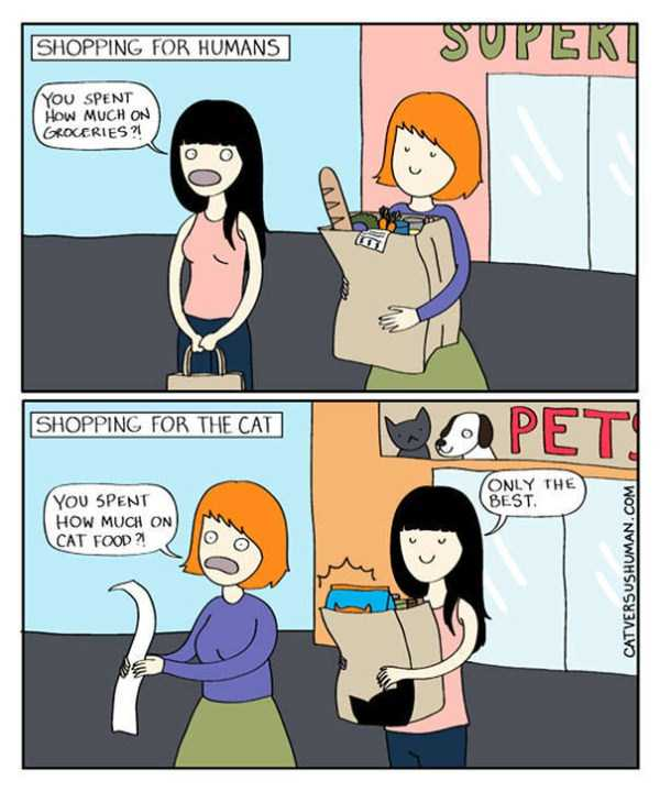 life-with-cats-funny-comics (87)