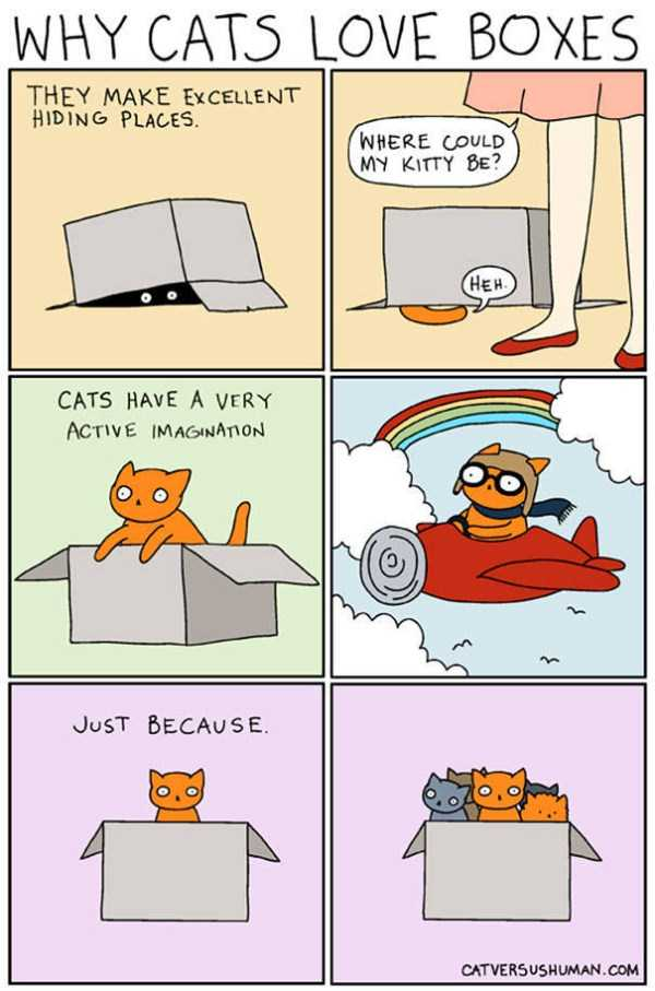life-with-cats-funny-comics (93)