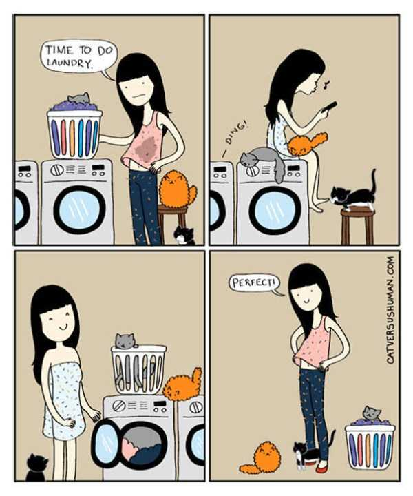 life-with-cats-funny-comics (94)