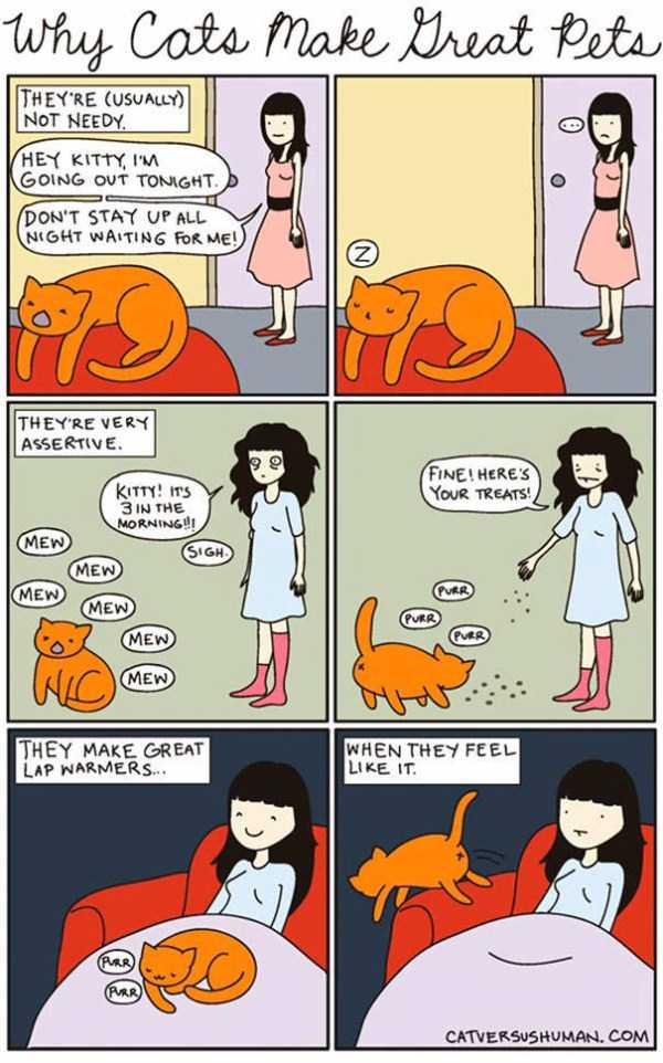 life-with-cats-funny-comics (99)