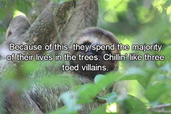 sloths-facts (3)