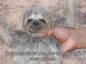 sloths-facts (7)